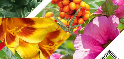 Kolekcja Leroy Merlin wiosna lato 2019 – Kwiaty polskiego ogrodu